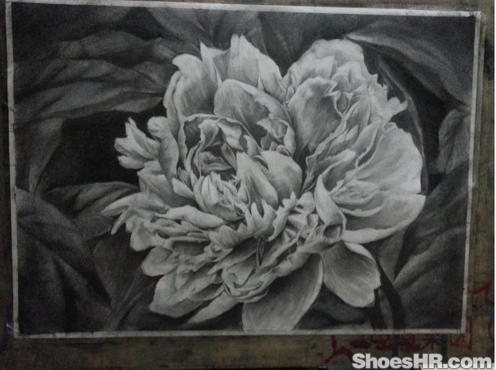 手绘素描牡丹花